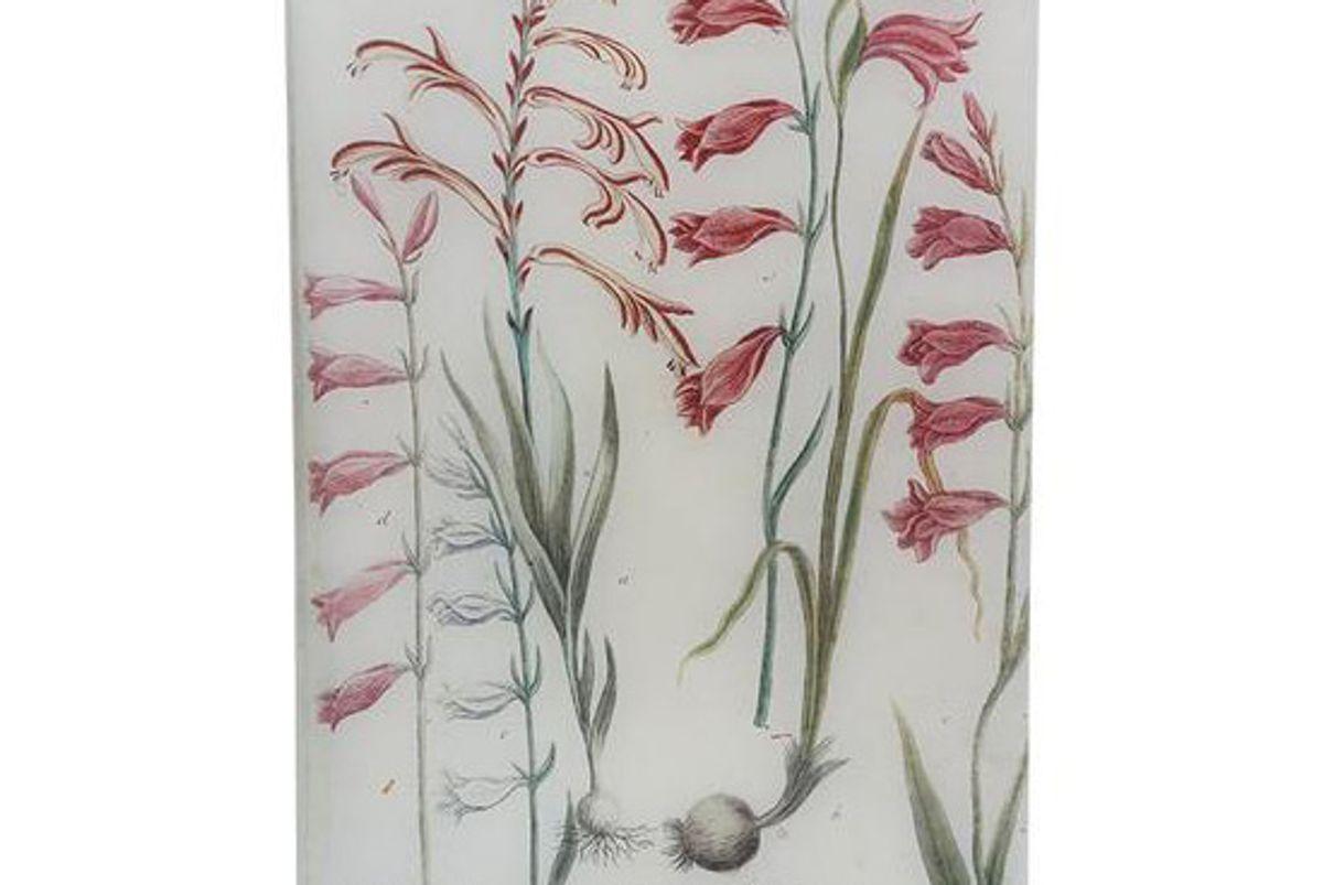 john derian n 546 african gladiolus