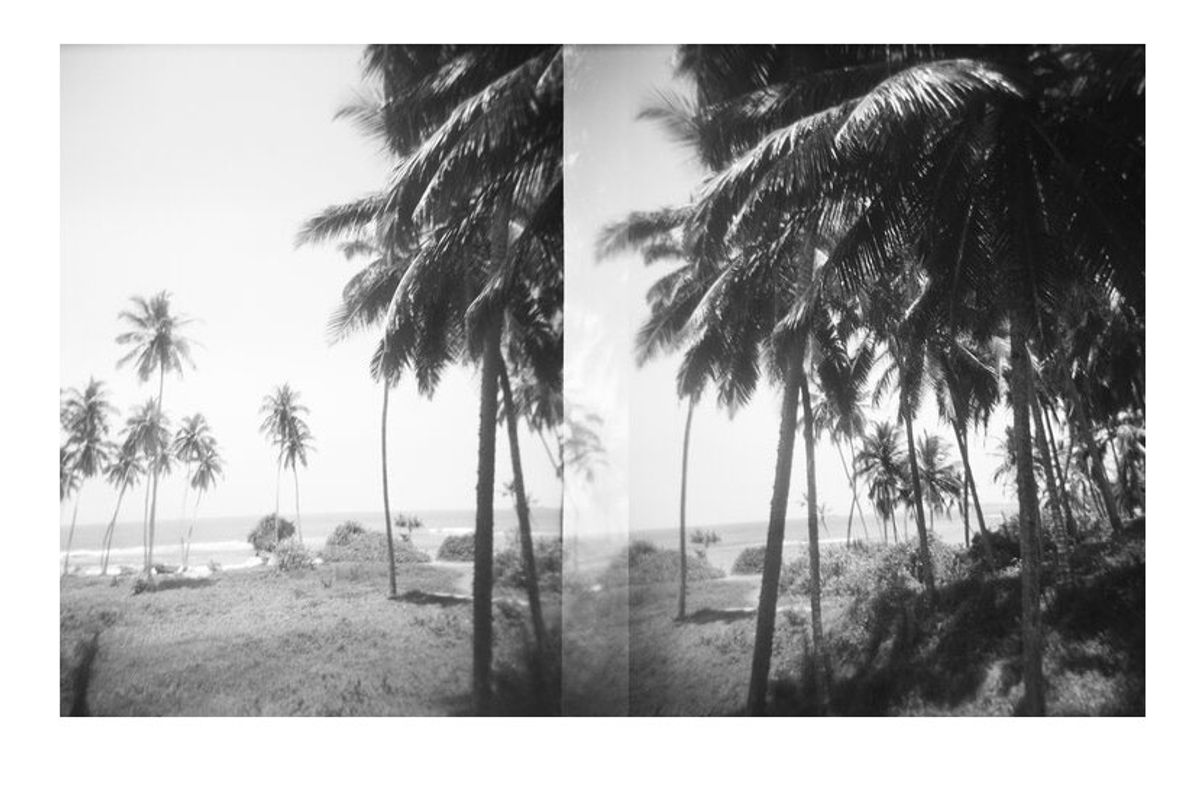 robert malmberg palm trees sri lanka print