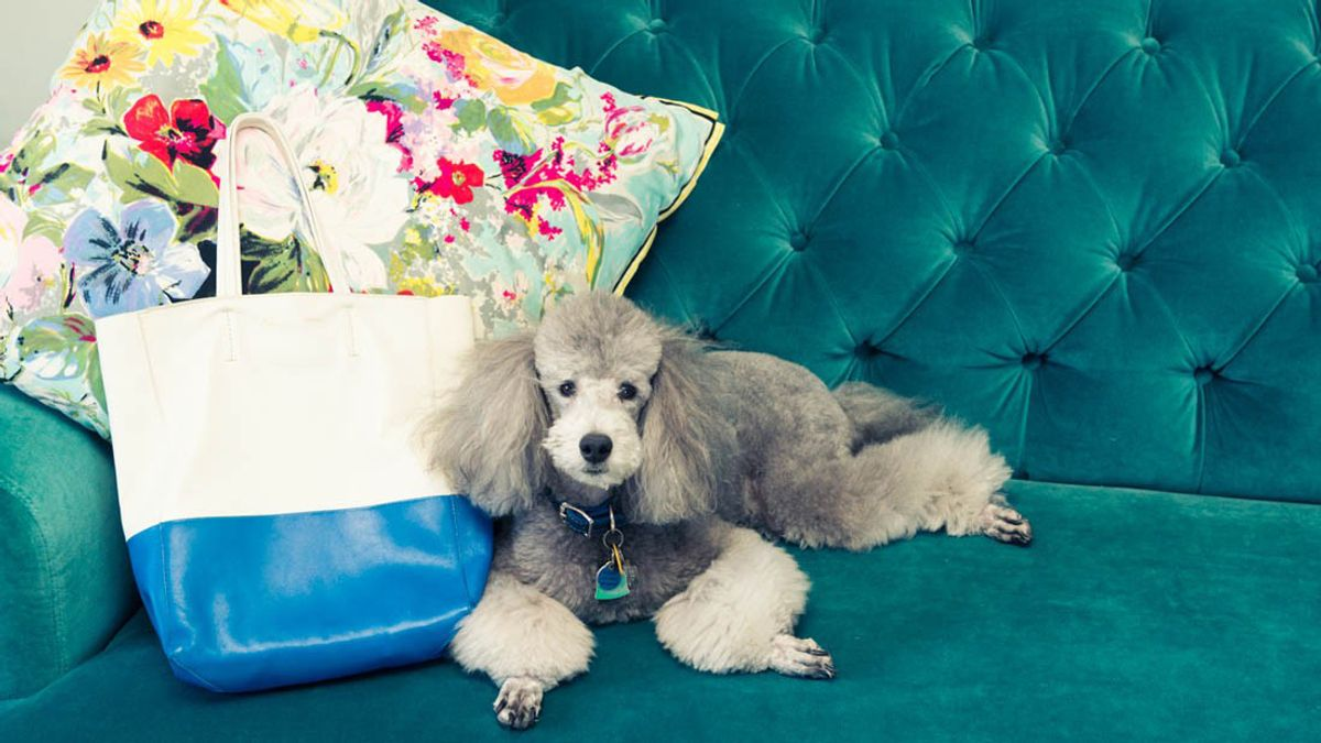 wellness industry now targeting pets