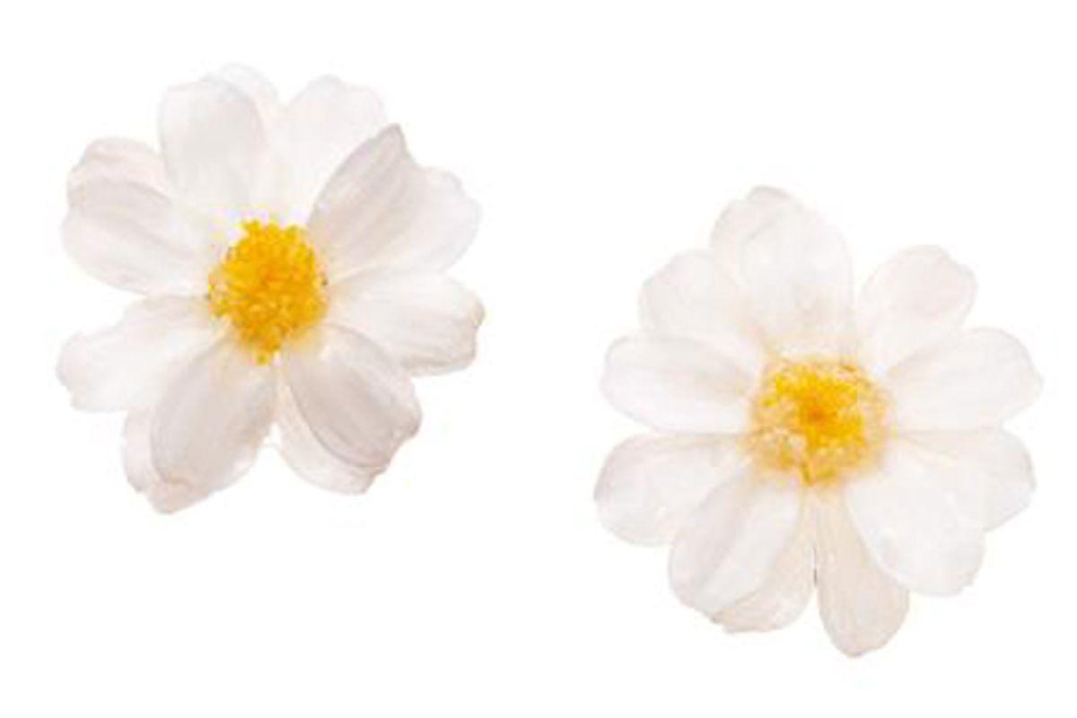immany real flower paris daisy stud earrings