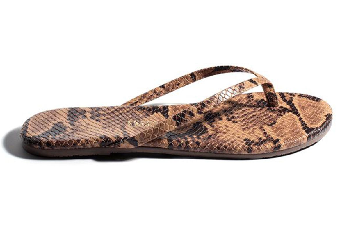 tkees coco snake