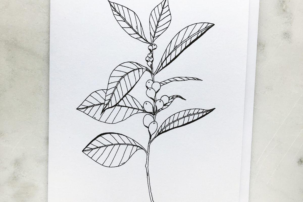 krista pischner studio coffee plant greeting card