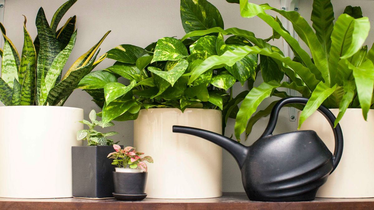Pretty Houseplants That Even *You* Can't Kill
