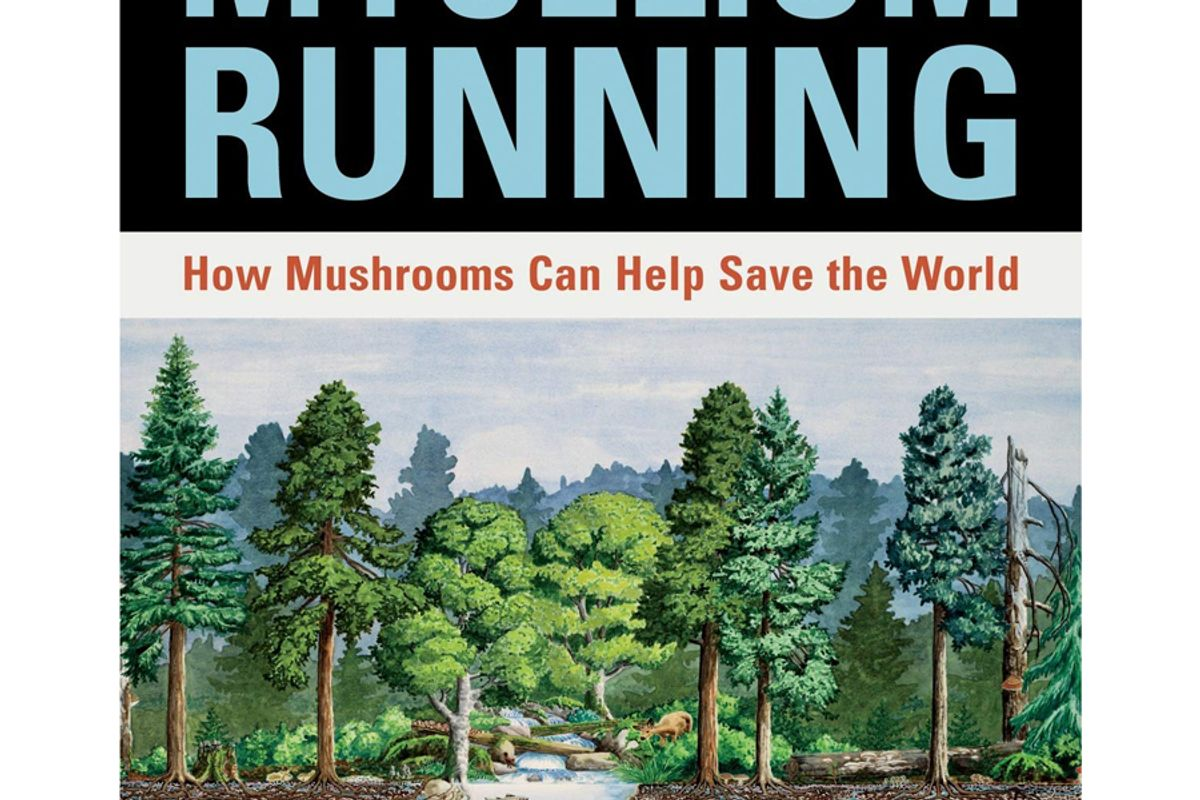 paul stamets mycelium running