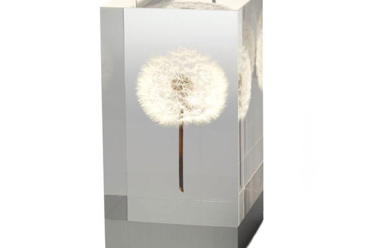takao inoue oled dandelion objet d'art