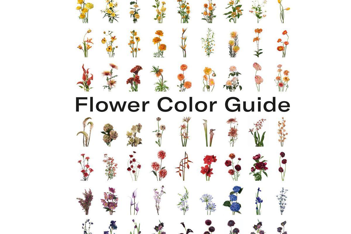 darroch putnam flower color guide
