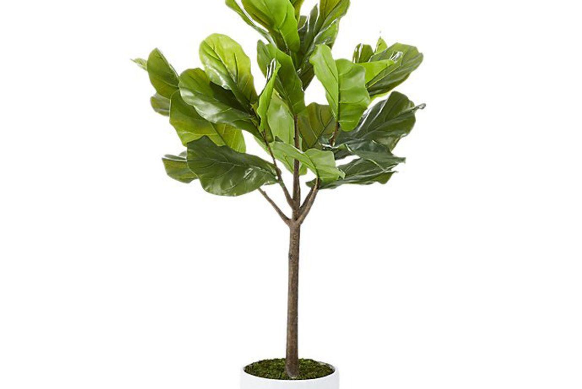 """Potted 65"""" Fiddle Leaf Fig"""