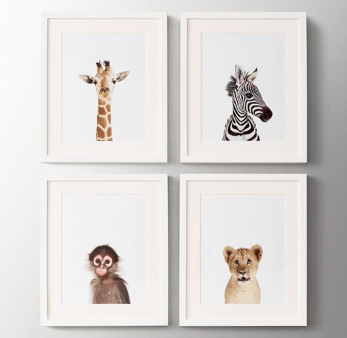 Baby Animal Close Up Portraits