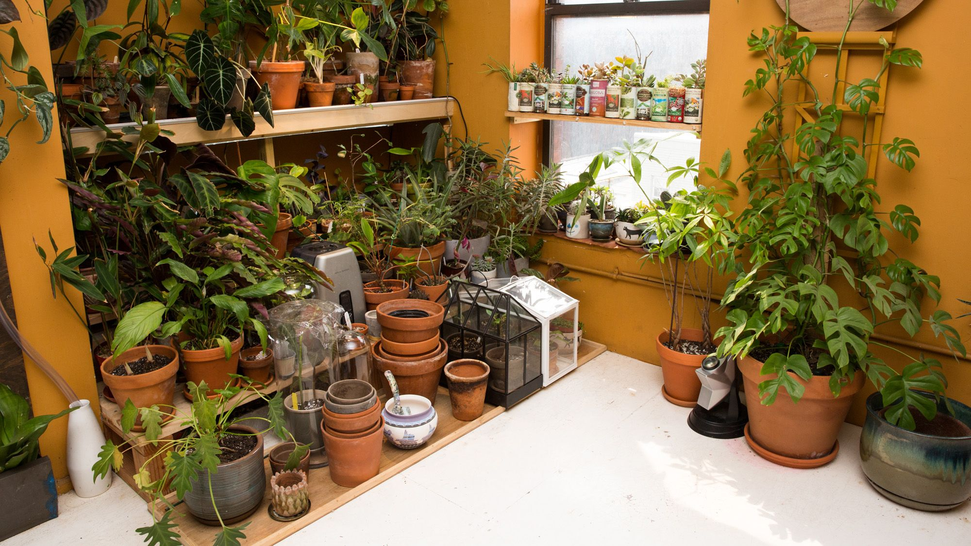 indoor houseplants do not purify the air