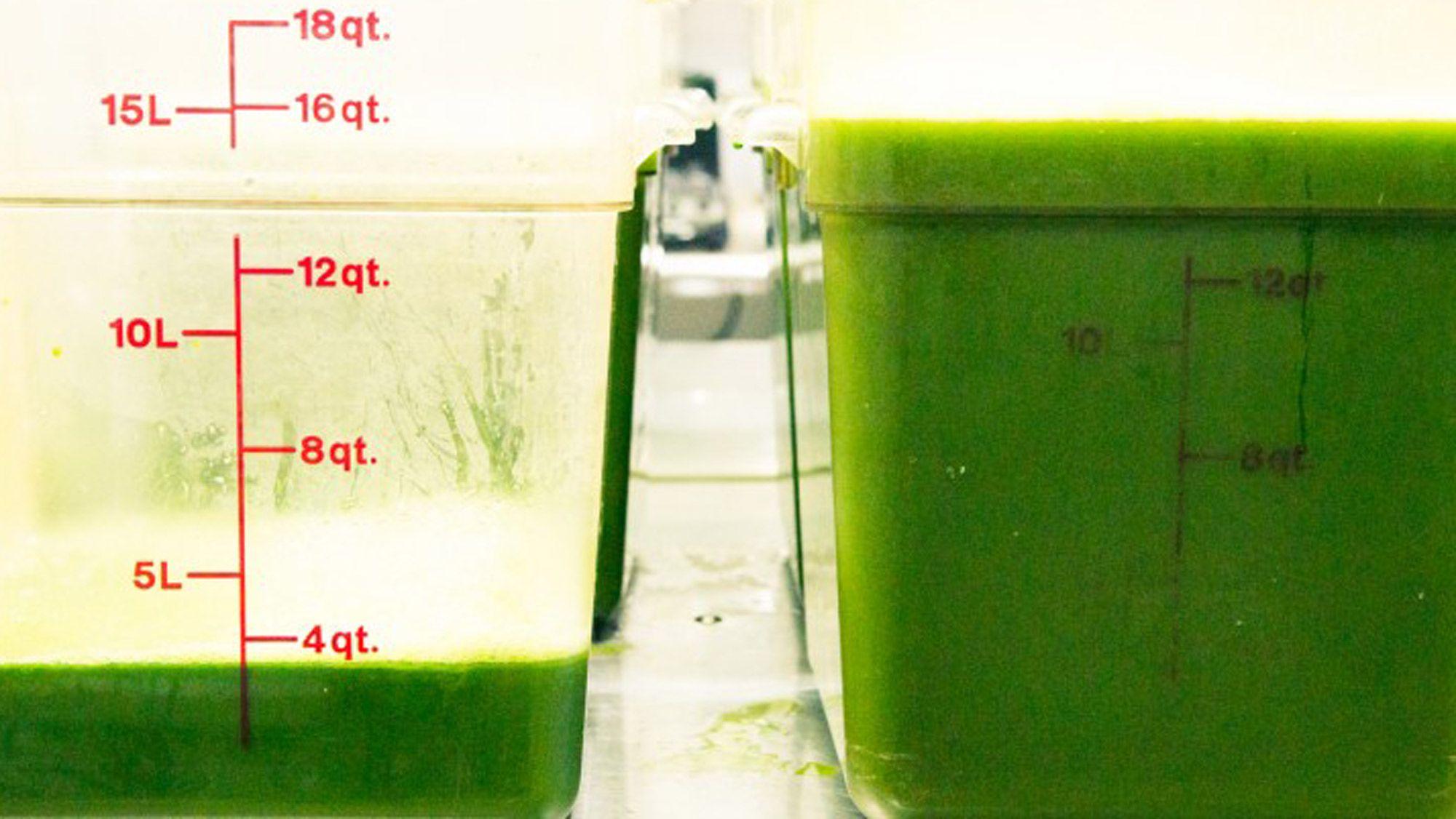 truth about celery juice trend