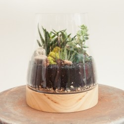 How to Make Your Own Terrarium in 9 Steps