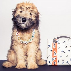 Your Guide to Spring Accessories ft. Walter the Whoodle