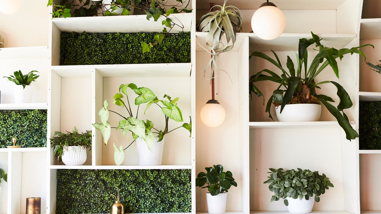 How to Keep Your Indoor Plants Alive