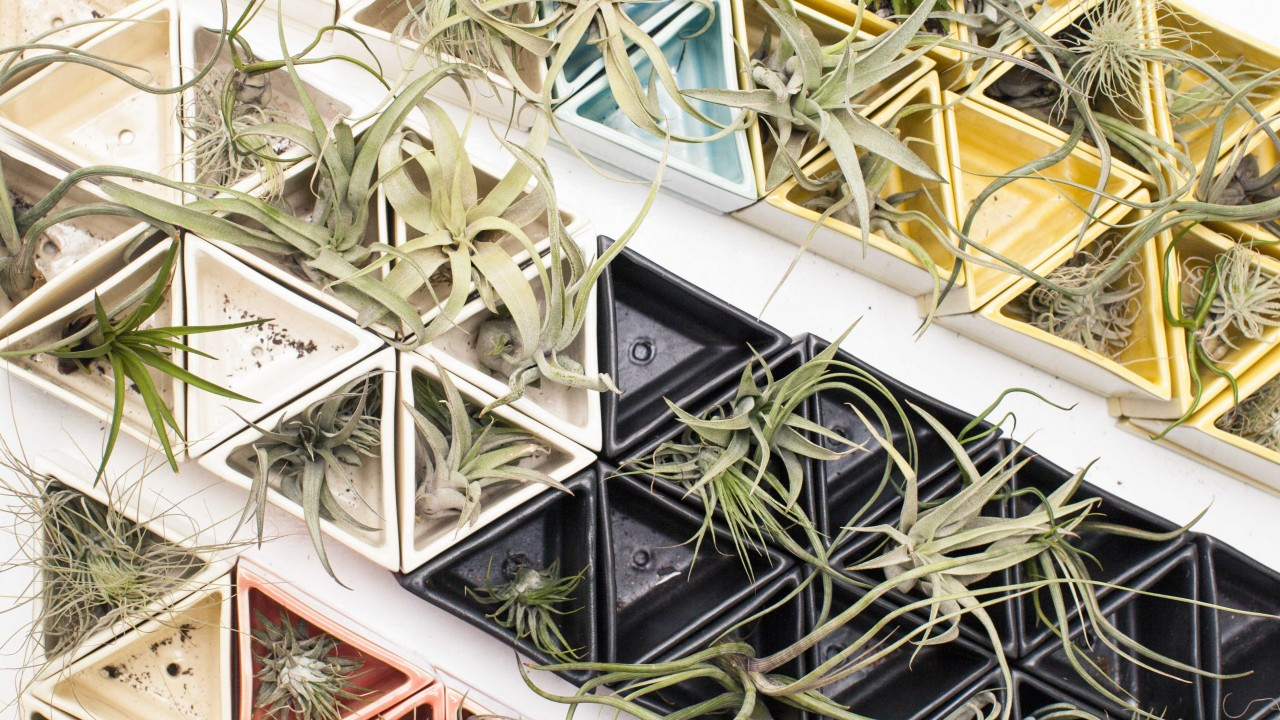 How a Downtown Plant Shop is Inspiring Green Thumbs Everywhere via Instagram