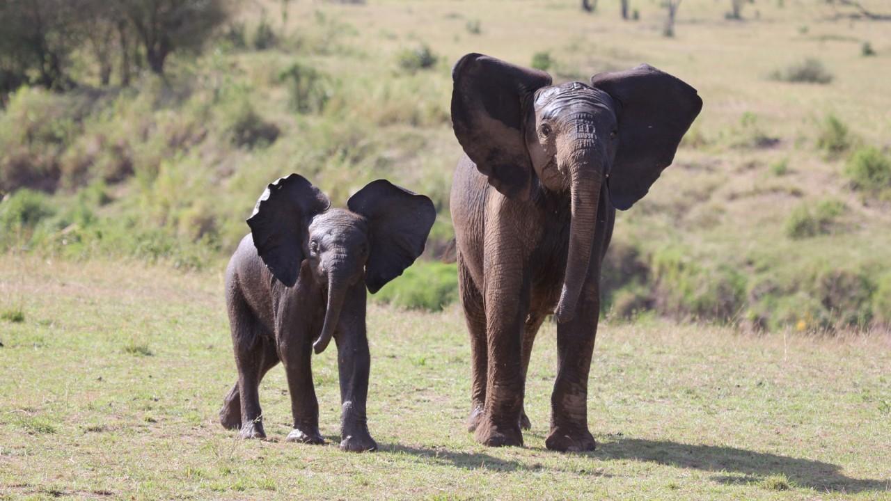 This Designer Went on the Most Luxurious Kenyan Safari