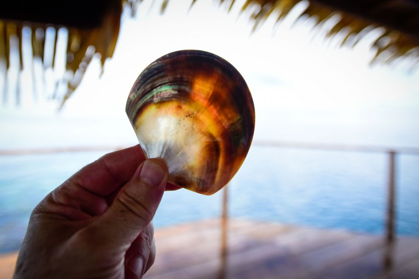 pearl diving in tahiti