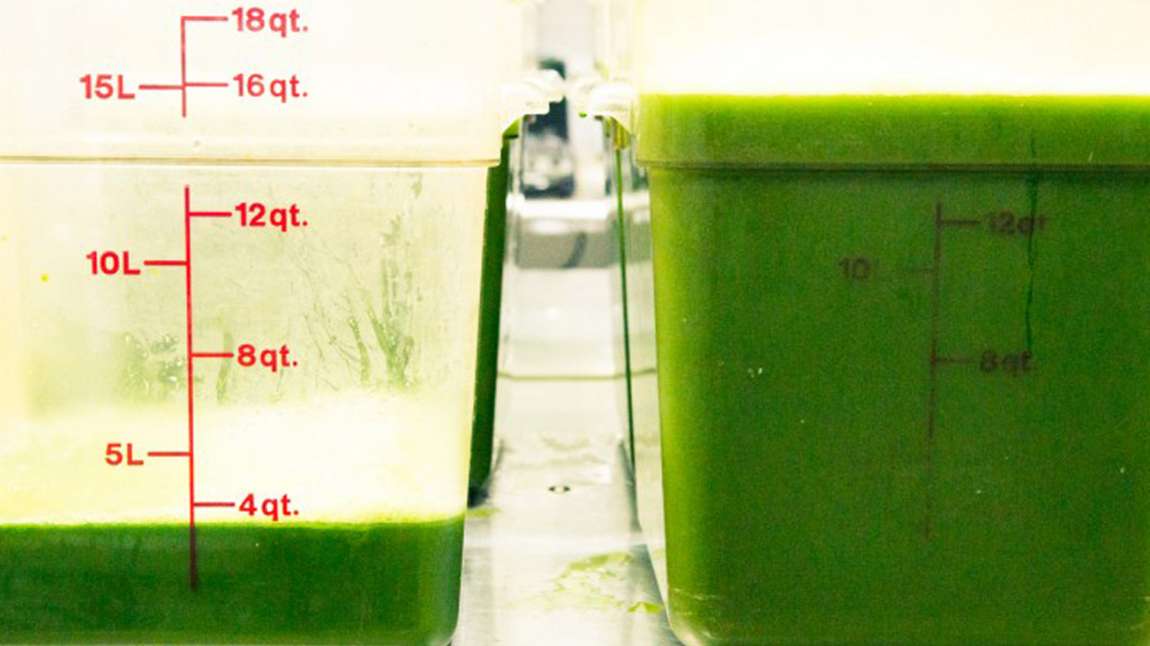 truth about celery juice trend