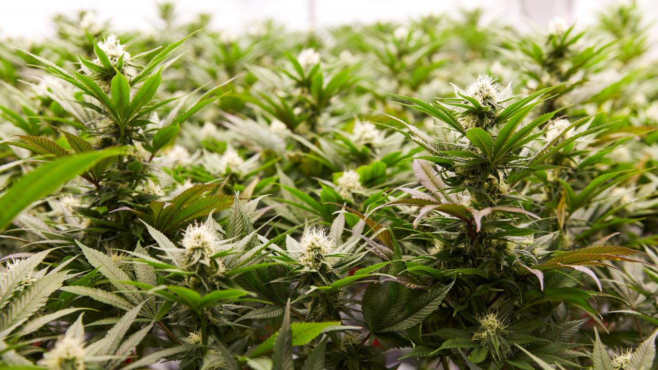 coveteur women in cannabis weekend