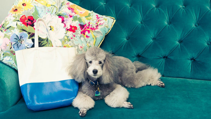 The Wellness Industry Is Now Targeting Your Pets