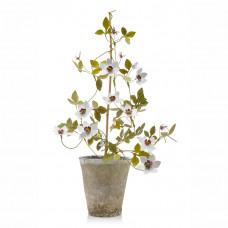 erbavoglio milano clematis copper flower pot