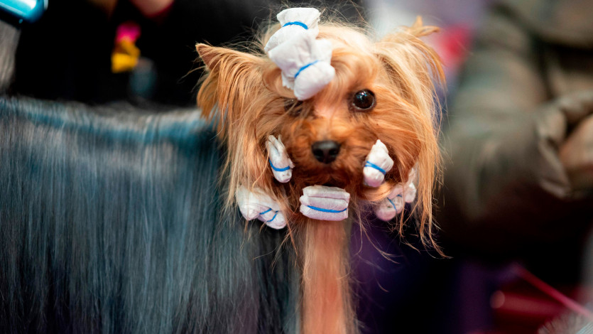 These Dogs' Beauty Routines Are Better Than Yours