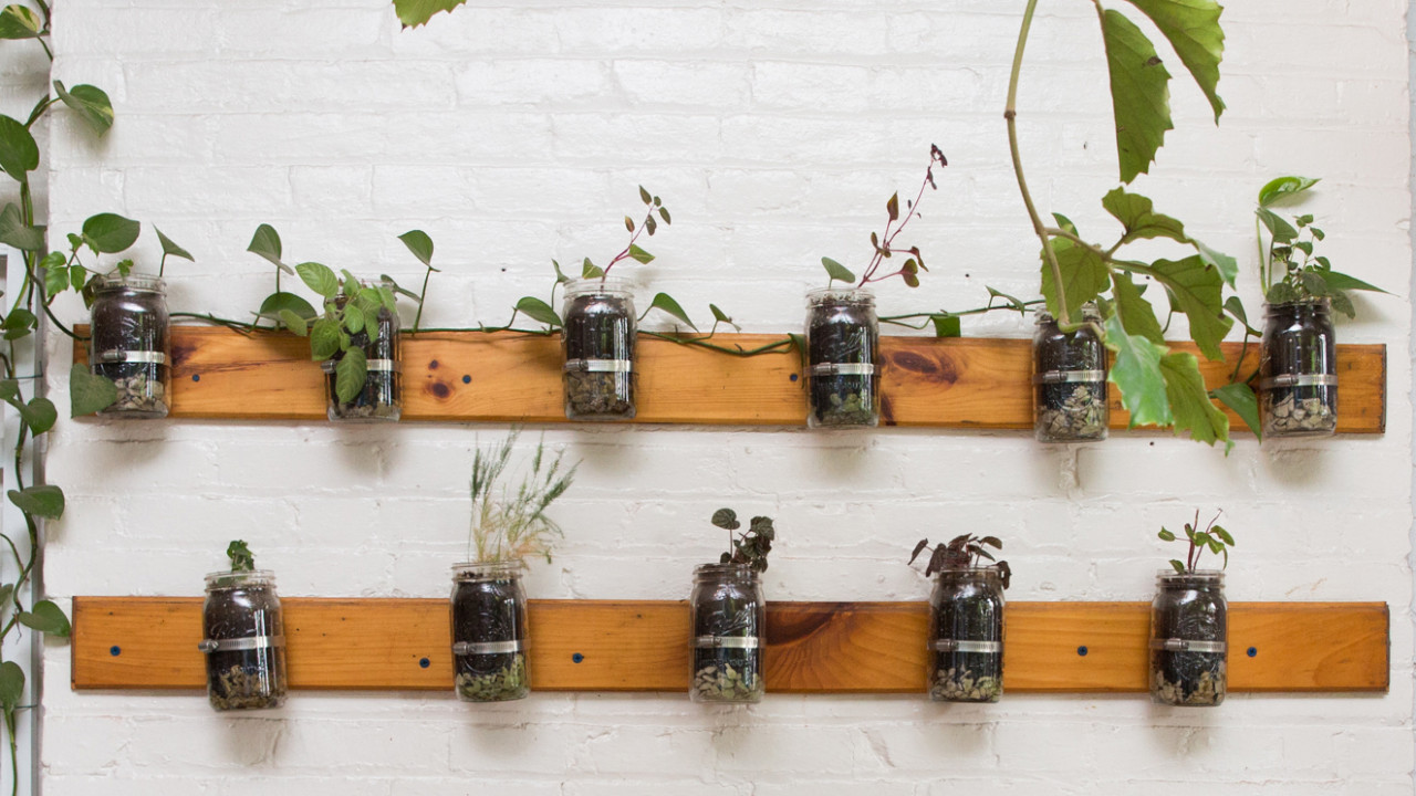 How to Grow Herbs in Your Kitchen